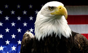 320px-American_Bald_Eagle with flag