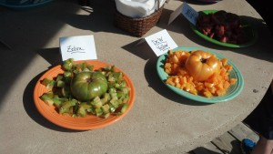 Two of ten types of tomatoes for the tomato tasting contest