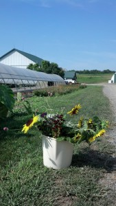 FC's bucket of fresh-cut flowers at Spiral Path farm